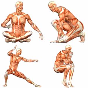 human body male anatomy pack