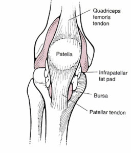 Figure 3. Patellofemoral joint