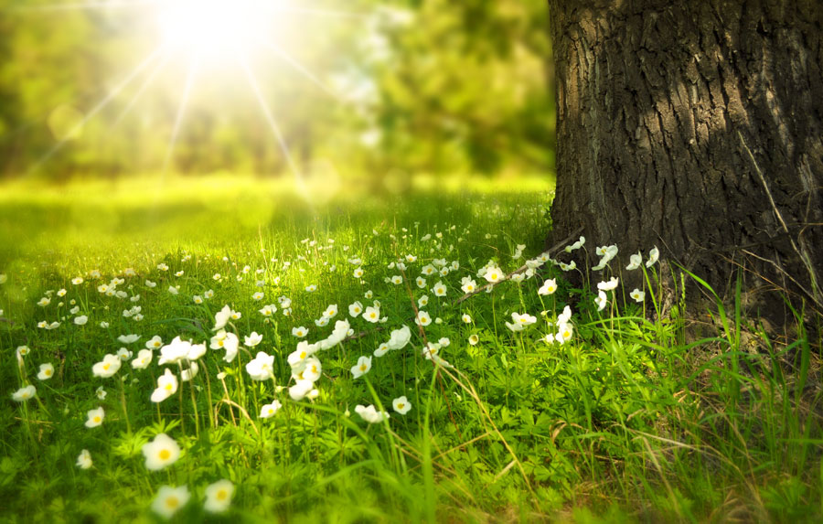 flowers-meadow