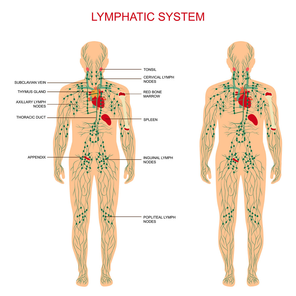 Rebounding And Lymphedema Medfit Network