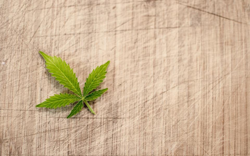 marijuana-3065621_960_720
