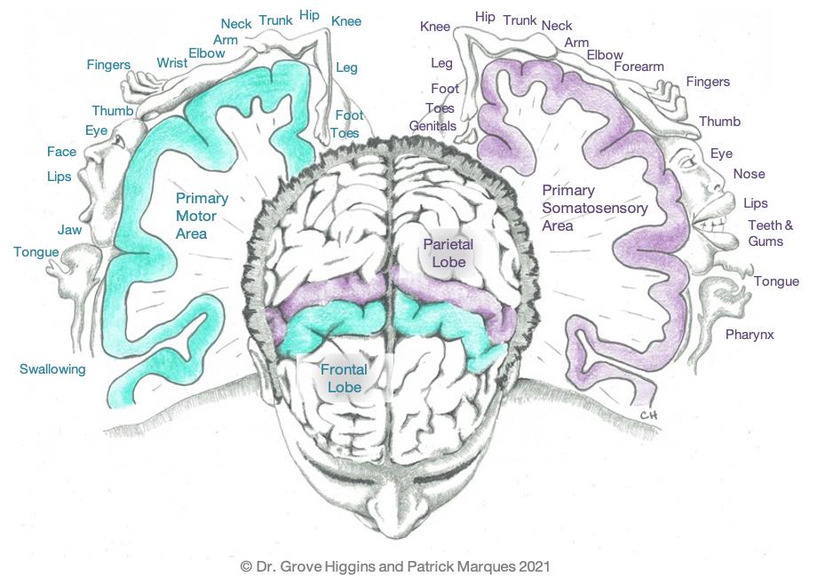 Stroke-Neuroplasticity