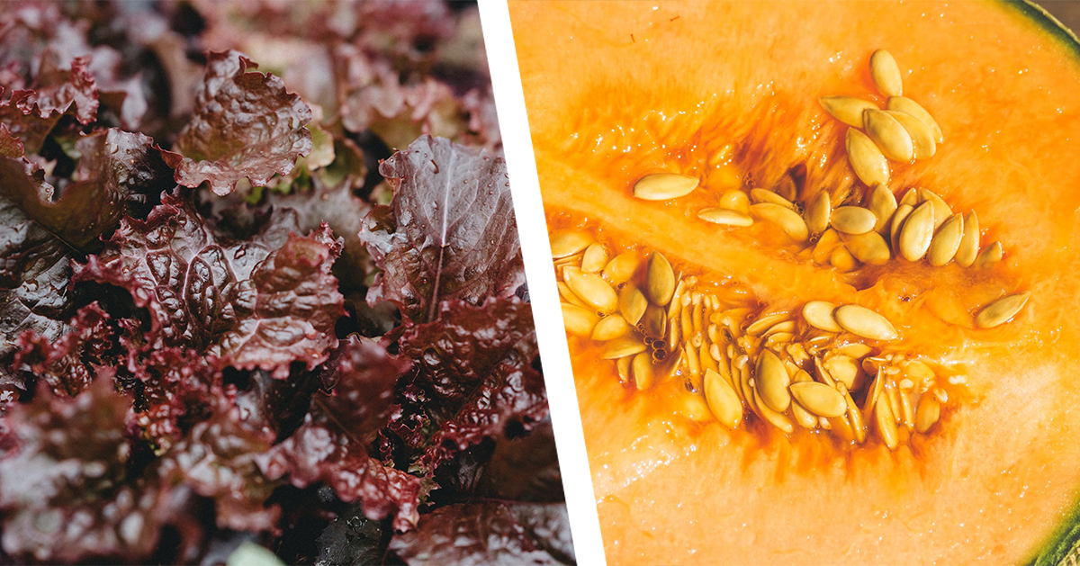 lettuce-cantaloupe
